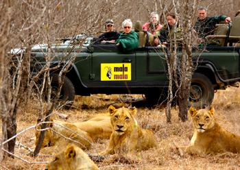 MalaMala Lions