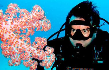 Madagascar - Nosy B Diving Program